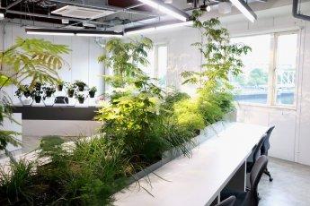科学的エビデンスと最適なデザイン。オフィス緑化サービス「COMORE BIZ」の秘訣に迫る